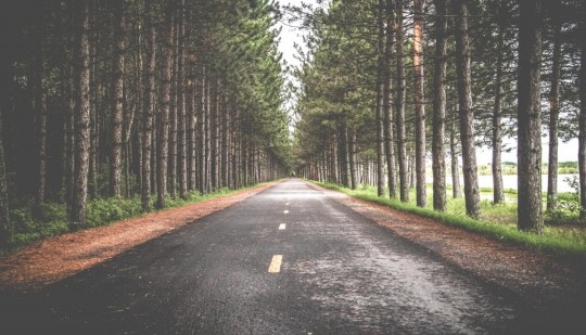 road in forest trees